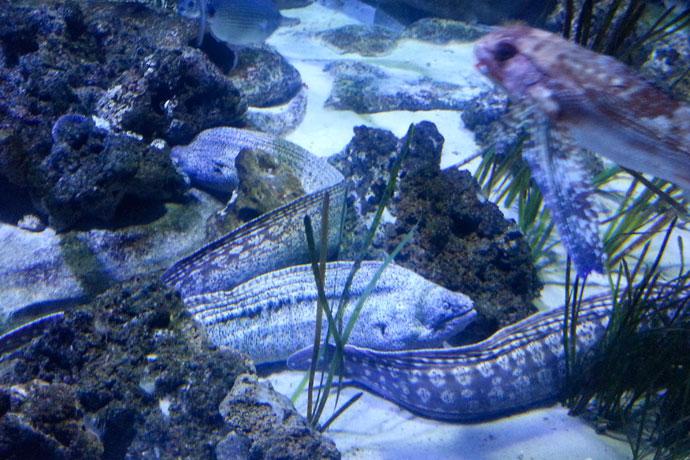 aquarium-de-paris-muraine