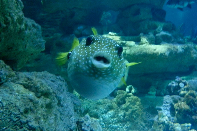 aquarium-de-paris-poissons