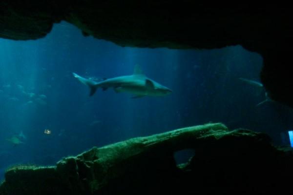 aquarium-de-paris-requin