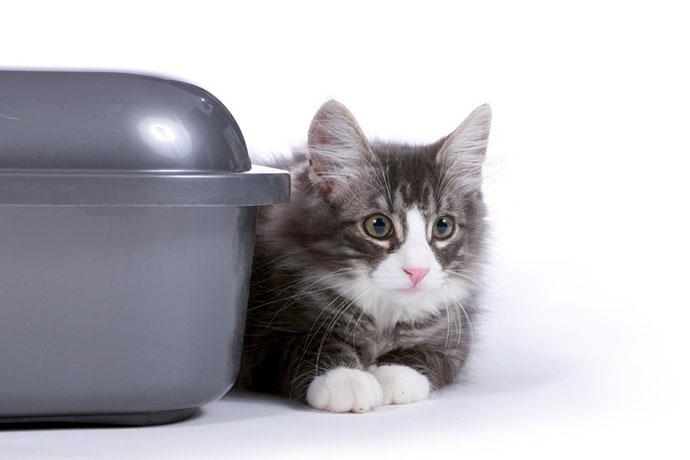 cat-s-best-litiere-chat