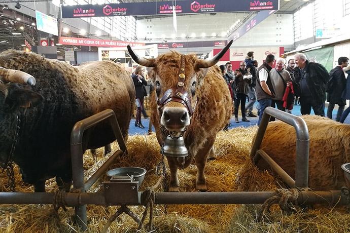 salon-agriculture-2018-vache