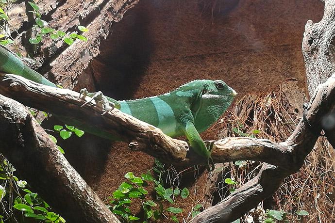 zoo-thoiry-cameleon