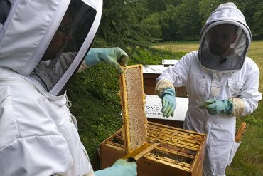 apiterra-observation-abeille